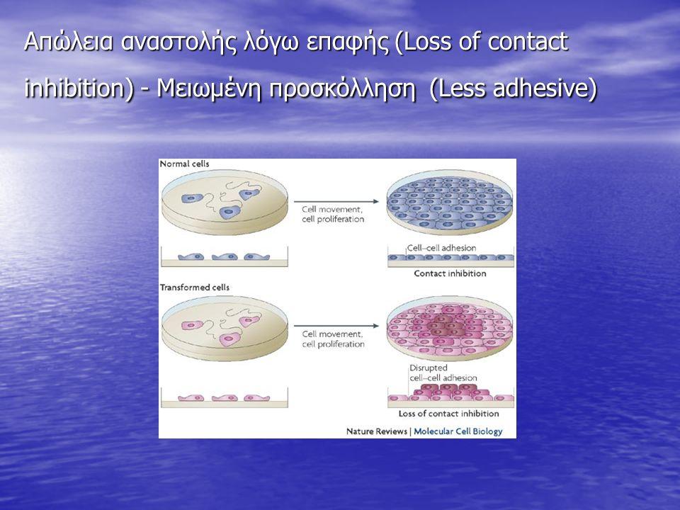 Απώλεια αναστολής λόγω επαφής (Loss of contact inhibition) - Μειωμένη προσκόλληση (Less adhesive)