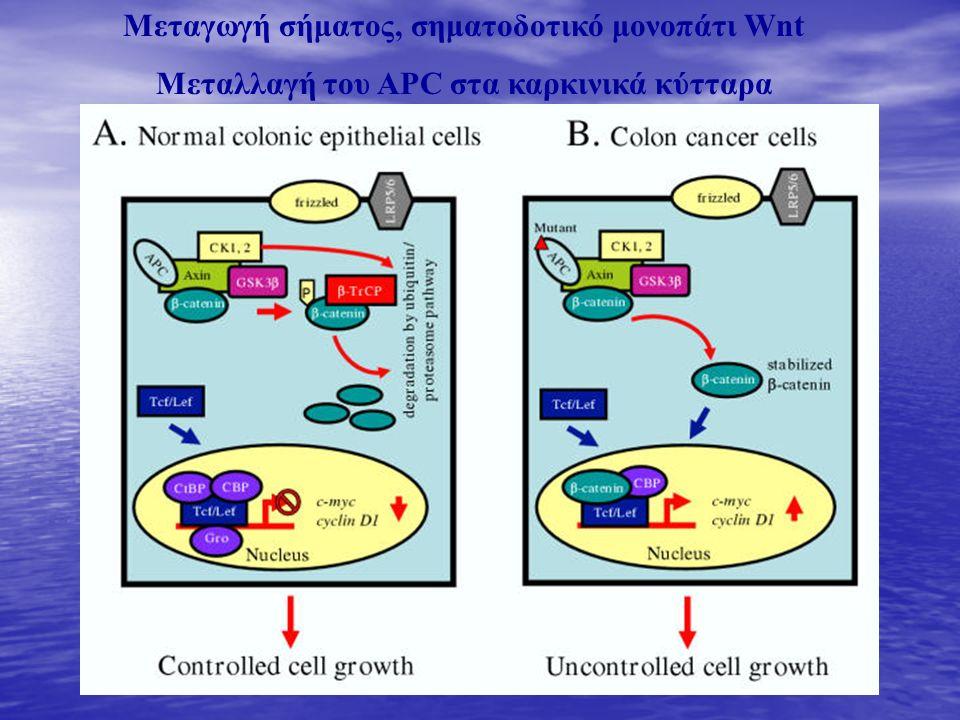 Μεταγωγή σήματος, σηματοδοτικό μονοπάτι Wnt Μεταλλαγή του APC στα καρκινικά κύτταρα