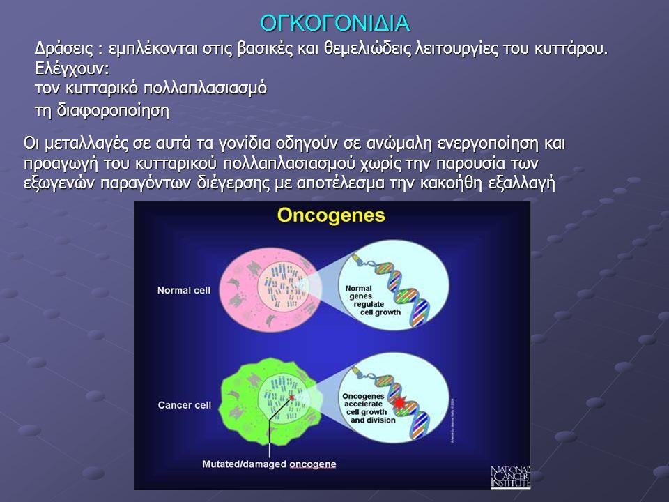 ΟΓΚΟΓΟΝΙΔΙΑ Δράσεις : εμπλέκονται στις βασικές και θεμελιώδεις λειτουργίες του κυττάρου.