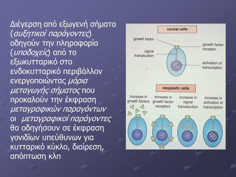 Διέγερση από εξωγενή σήματα (αυξητικοί παράγοντες) οδηγούν την πληροφορία (υποδοχείς) από το εξωκυτταρικό στο ενδοκυτταρικό περιβάλλον ενεργοποιώντας μόρια μεταγωγής σήματος που προκαλούν την έκφραση μεταγραφικών παραγόντων οι μεταγραφικοί παράγοντες θα οδηγήσουν σε έκφραση γονιδίων υπεύθυνων για κυτταρικό κύκλο, διαίρεση, απόπτωση κλπ