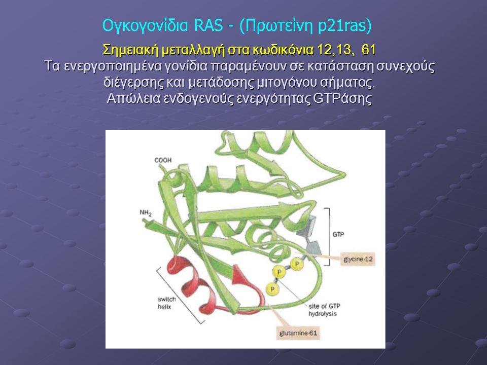 Σημειακή μεταλλαγή στα κωδικόνια 12,13, 61 Τα ενεργοποιημένα γονίδια παραμένουν σε κατάσταση συνεχούς διέγερσης και μετάδοσης μιτογόνου σήματος.
