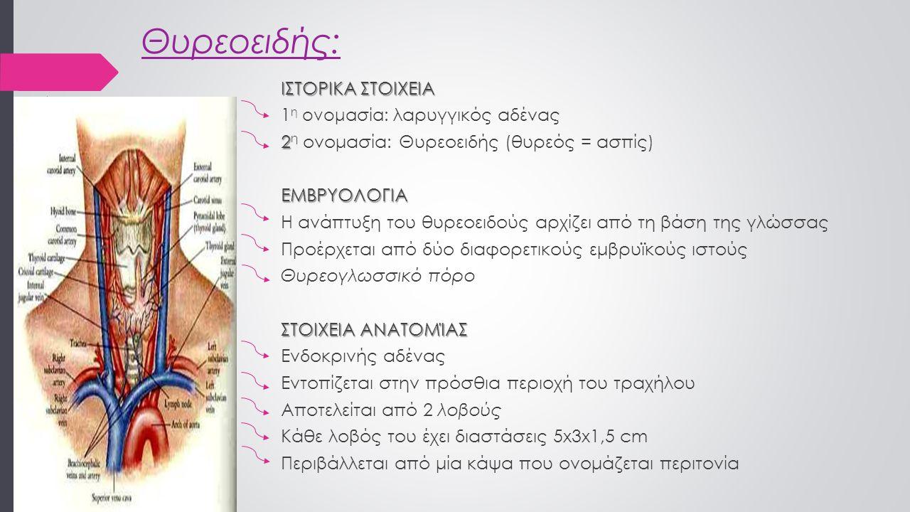 Θυρεοειδής: ΙΣΤΟΡΙΚΑ ΣΤΟΙΧΕΙΑ 1 η ονομασία: λαρυγγικός αδένας 2 2 η ονομασία: Θυρεοειδής (θυρεός = ασπίς)ΕΜΒΡΥΟΛΟΓΙΑ Η ανάπτυξη του θυρεοειδούς αρχίζει από τη βάση της γλώσσας Προέρχεται από δύο διαφορετικούς εμβρυϊκούς ιστούς Θυρεογλωσσικό πόρο ΣΤΟΙΧΕΙΑ ΑΝΑΤΟΜΊΑΣ Ενδοκρινής αδένας Εντοπίζεται στην πρόσθια περιοχή του τραχήλου Αποτελείται από 2 λοβούς Κάθε λοβός του έχει διαστάσεις 5x3x1,5 cm Περιβάλλεται από μία κάψα που ονομάζεται περιτονία