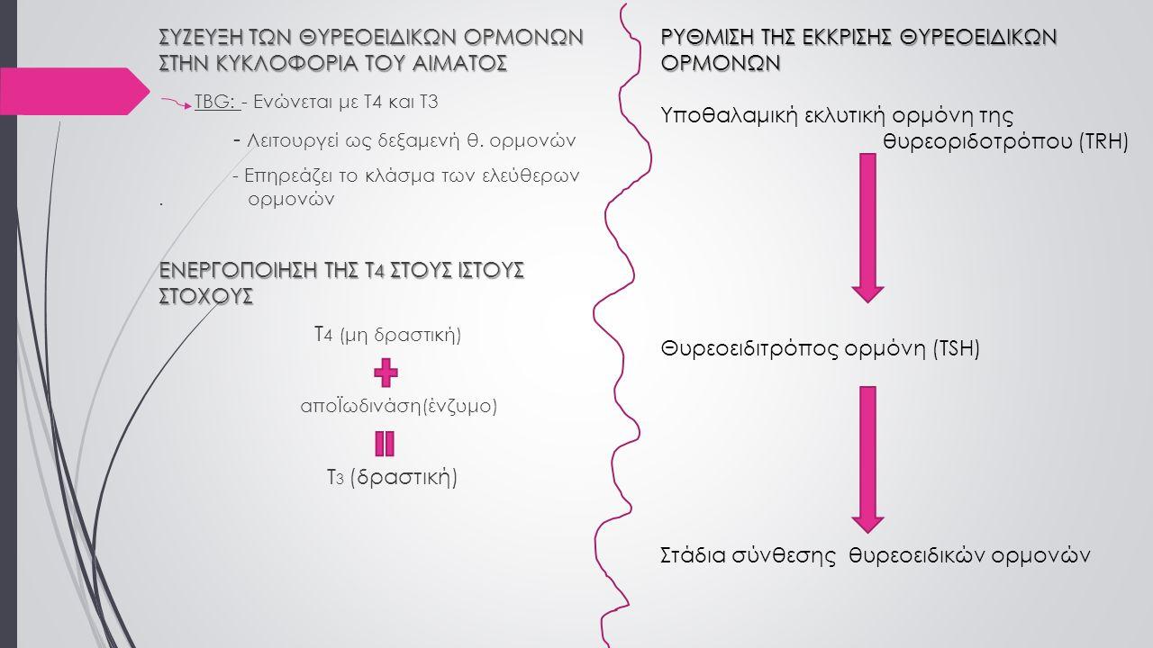 ΣΥΖΕΥΞΗ ΤΩΝ ΘΥΡΕΟΕΙΔΙΚΩΝ ΟΡΜΟΝΩΝ ΣΤΗΝ ΚΥΚΛΟΦΟΡΙΑ ΤΟΥ ΑΙΜΑΤΟΣ TBG: - Ενώνεται με Τ4 και Τ3 - Λειτουργεί ως δεξαμενή θ. ορμονών - Επηρεάζει το κλάσμα τω