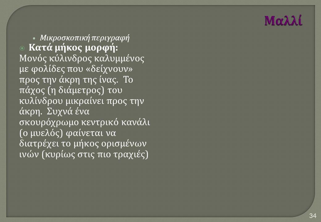 Μικροσκοπική περιγραφή  Κατά μήκος μορφή : Μονός κύλινδρος καλυμμένος με φολίδες που « δείχνουν » προς την άκρη της ίνας.