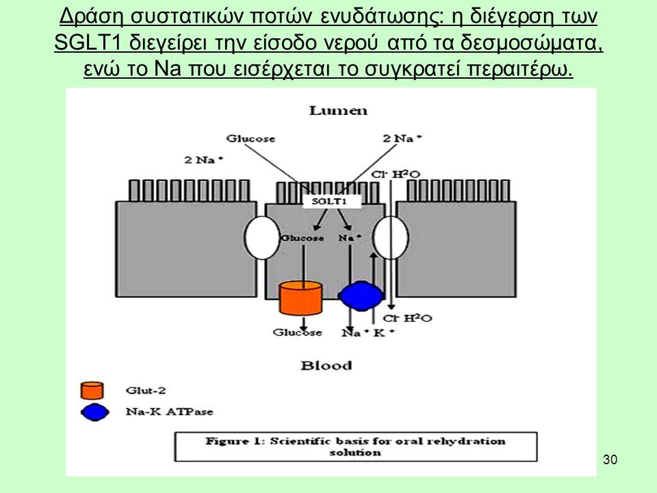 30 Δράση συστατικών ποτών ενυδάτωσης: η διέγερση των SGLT1 διεγείρει την είσοδο νερού από τα δεσμοσώματα, ενώ το Na που εισέρχεται το συγκρατεί περαιτέρω.