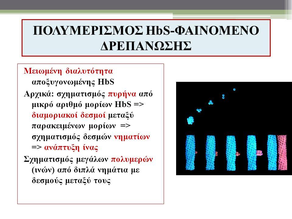 ΠΟΛΥΜΕΡΙΣΜΟΣ HbS-ΦΑΙΝΟΜΕΝΟ ΔΡΕΠΑΝΩΣΗΣ Μειωμένη διαλυτότητα αποξυγονωμένης HbS Αρχικά: σχηματισμός πυρήνα από μικρό αριθμό μορίων HbS => διαμοριακοί δεσμοί μεταξύ παρακειμένων μορίων => σχηματισμός δεσμών νηματίων => ανάπτυξη ίνας Σχηματισμός μεγάλων πολυμερών (ινών) από διπλά νημάτια με δεσμούς μεταξύ τους