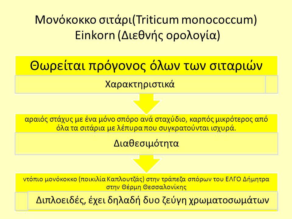 Μονόκοκκο σιτάρι(Triticum monococcum) Einkorn (Διεθνής ορολογία) ντόπιο μονόκοκκο (ποικιλία Καπλουτζάς) στην τράπεζα σπόρων του ΕΛΓΟ Δήμητρα στην Θέρμη Θεσσαλονίκης Διπλοειδές, έχει δηλαδή δυο ζεύγη χρωματοσωμάτων αραιός στάχυς με ένα μόνο σπόρο ανά σταχύδιο, καρπός μικρότερος από όλα τα σιτάρια με λέπυρα που συγκρατούνται ισχυρά.