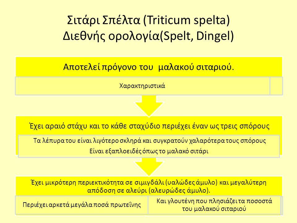 Σιτάρι Σπέλτα (Triticum spelta) Διεθνής ορολογία(Spelt, Dingel) Έχει μικρότερη περιεκτικότητα σε σιμιγδάλι (υαλώδες άμυλο) και μεγαλύτερη απόδοση σε αλεύρι (αλευρώδες άμυλο).