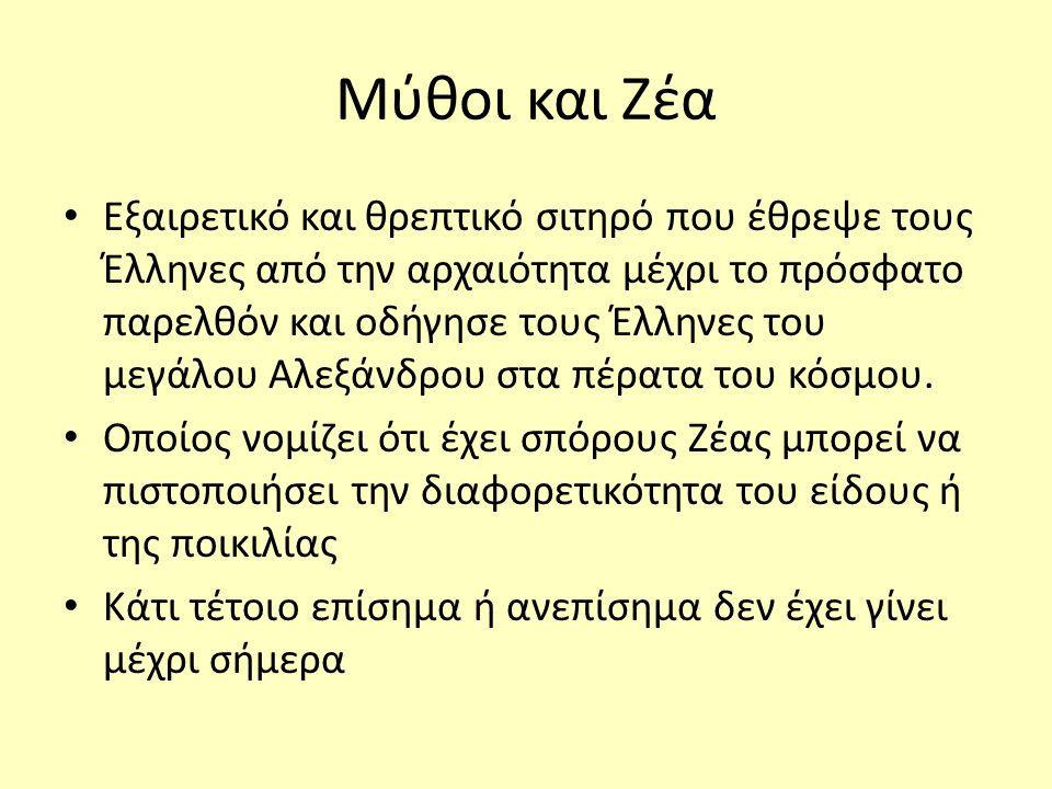 Μύθοι και Ζέα Εξαιρετικό και θρεπτικό σιτηρό που έθρεψε τους Έλληνες από την αρχαιότητα μέχρι το πρόσφατο παρελθόν και οδήγησε τους Έλληνες του μεγάλου Αλεξάνδρου στα πέρατα του κόσμου.