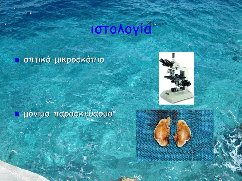 ιστολογία οπτικό μικροσκόπιο οπτικό μικροσκόπιο μόνιμο παρασκεύασμα μόνιμο παρασκεύασμα