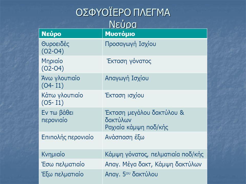 ΟΣΦΥΟΪΕΡΟ ΠΛΕΓΜΑ Νεύρα ΝεύροΜυοτόμιο Θυροειδές (Ο2-Ο4) Προσαγωγή Ισχίου Μηριαίο (Ο2-Ο4) Έκταση γόνατος Άνω γλουτιαίο (Ο4- Ι1) Απαγωγή Ισχίου Κάτω γλου