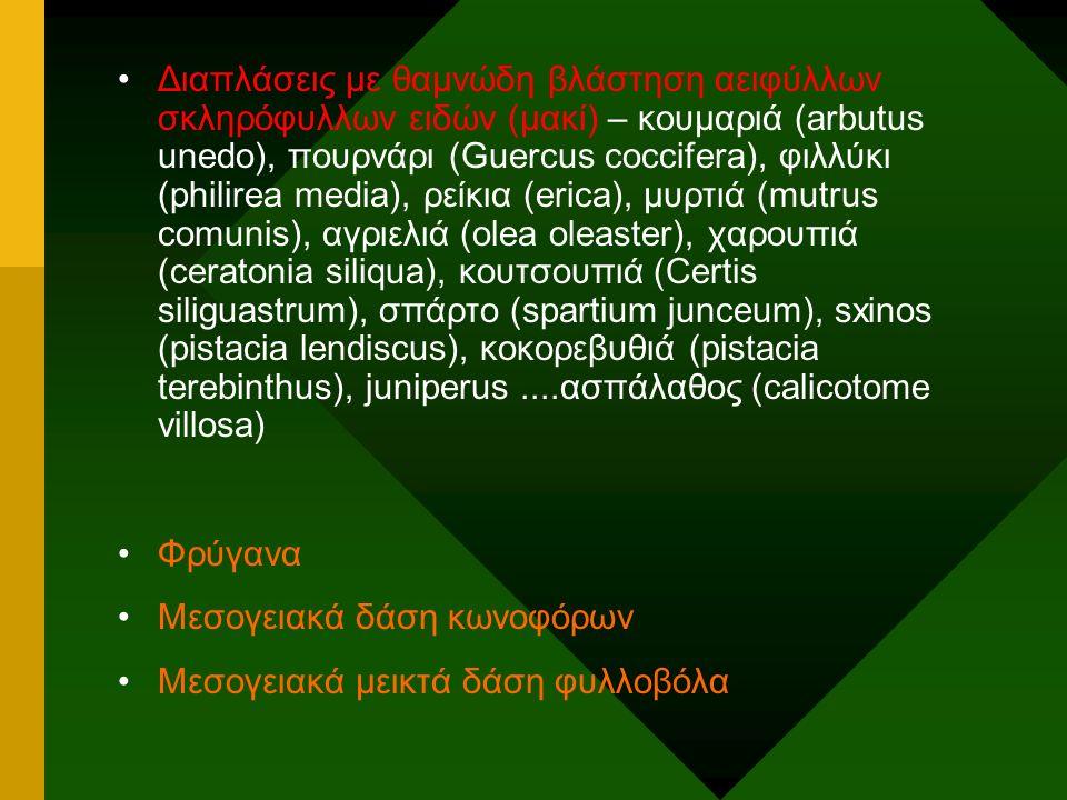Διαπλάσεις με θαμνώδη βλάστηση αειφύλλων σκληρόφυλλων ειδών (μακί) – κουμαριά (arbutus unedo), πουρνάρι (Guercus coccifera), φιλλύκι (philirea media),