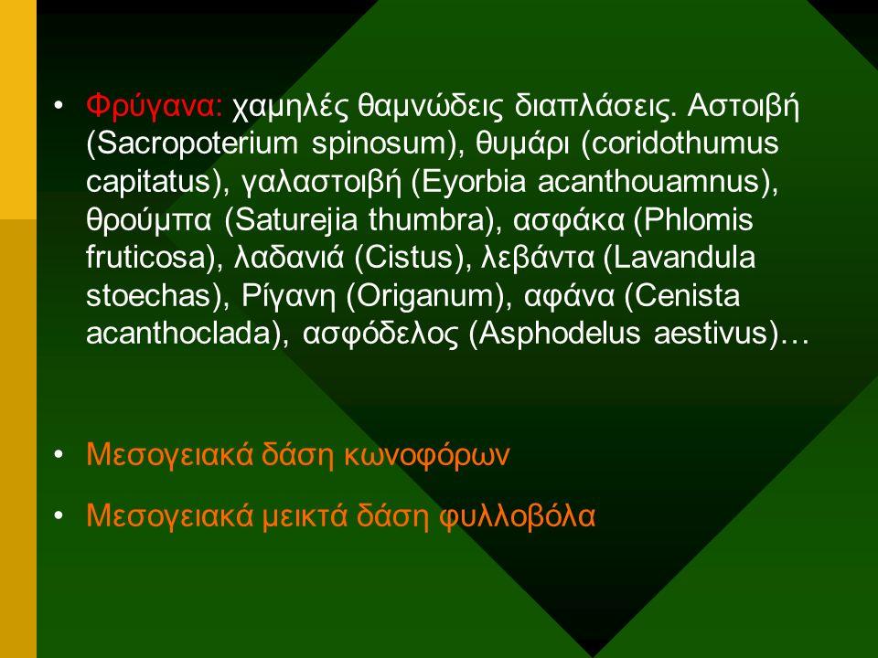 Φρύγανα: χαμηλές θαμνώδεις διαπλάσεις. Αστοιβή (Sacropoterium spinosum), θυμάρι (coridothumus capitatus), γαλαστοιβή (Eyorbia acanthouamnus), θρούμπα
