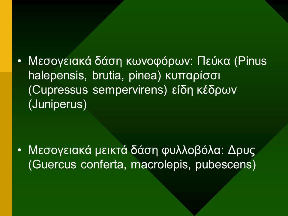 Μεσογειακά δάση κωνοφόρων: Πεύκα (Pinus halepensis, brutia, pinea) κυπαρίσσι (Cupressus sempervirens) είδη κέδρων (Juniperus) Μεσογειακά μεικτά δάση φ