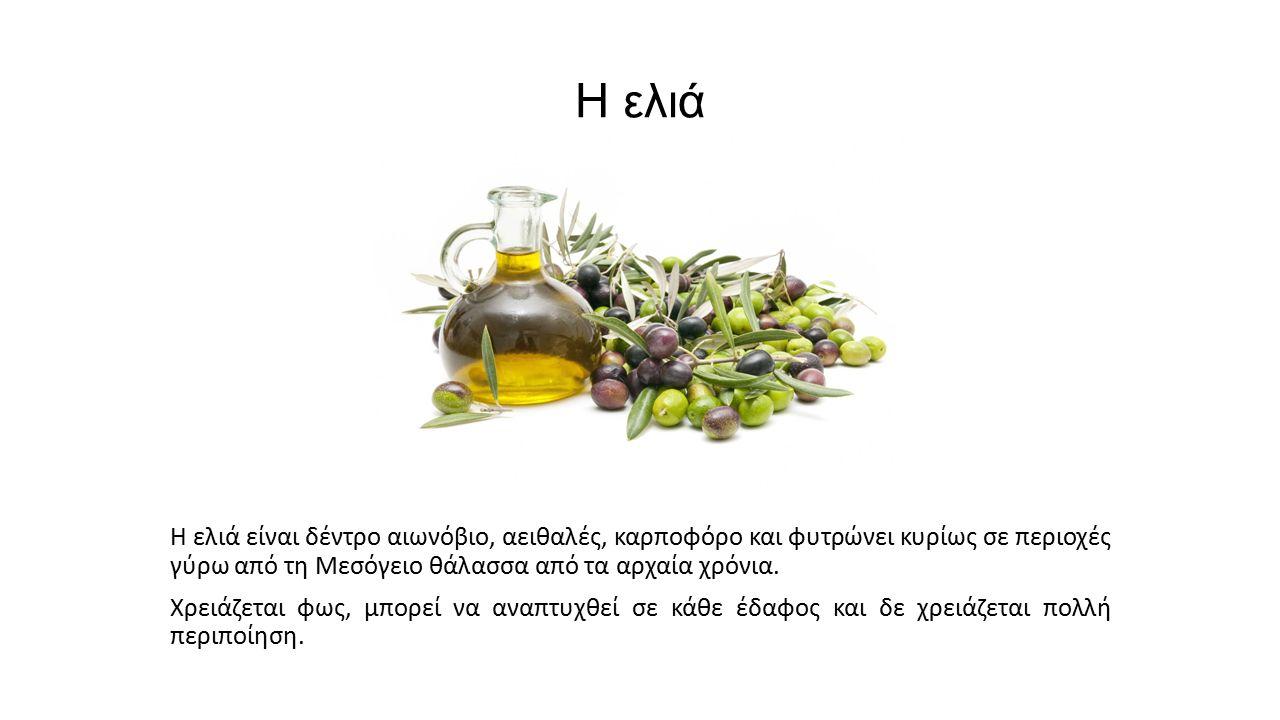 Η ελιά Η ελιά είναι δέντρο αιωνόβιο, αειθαλές, καρποφόρο και φυτρώνει κυρίως σε περιοχές γύρω από τη Μεσόγειο θάλασσα από τα αρχαία χρόνια. Χρειάζεται