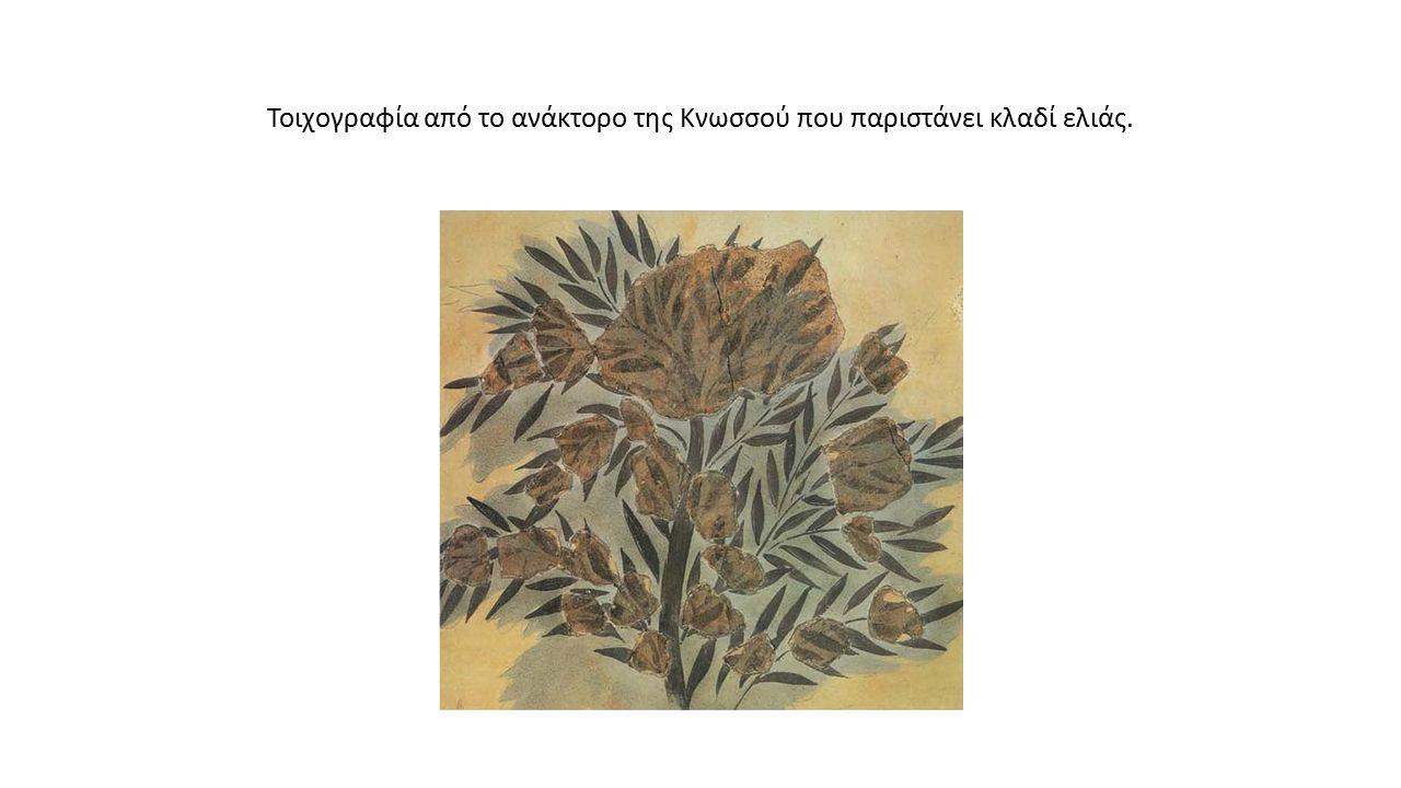 Τοιχογραφία από το ανάκτορο της Κνωσσού που παριστάνει κλαδί ελιάς.