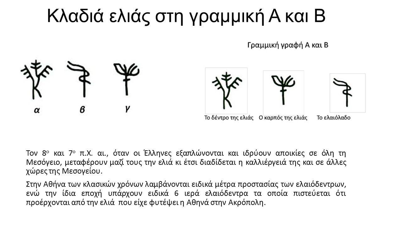 Κλαδιά ελιάς στη γραμμική Α και Β Τον 8 ο και 7 ο π.Χ. αι., όταν οι Έλληνες εξαπλώνονται και ιδρύουν αποικίες σε όλη τη Μεσόγειο, μεταφέρουν μαζί τους