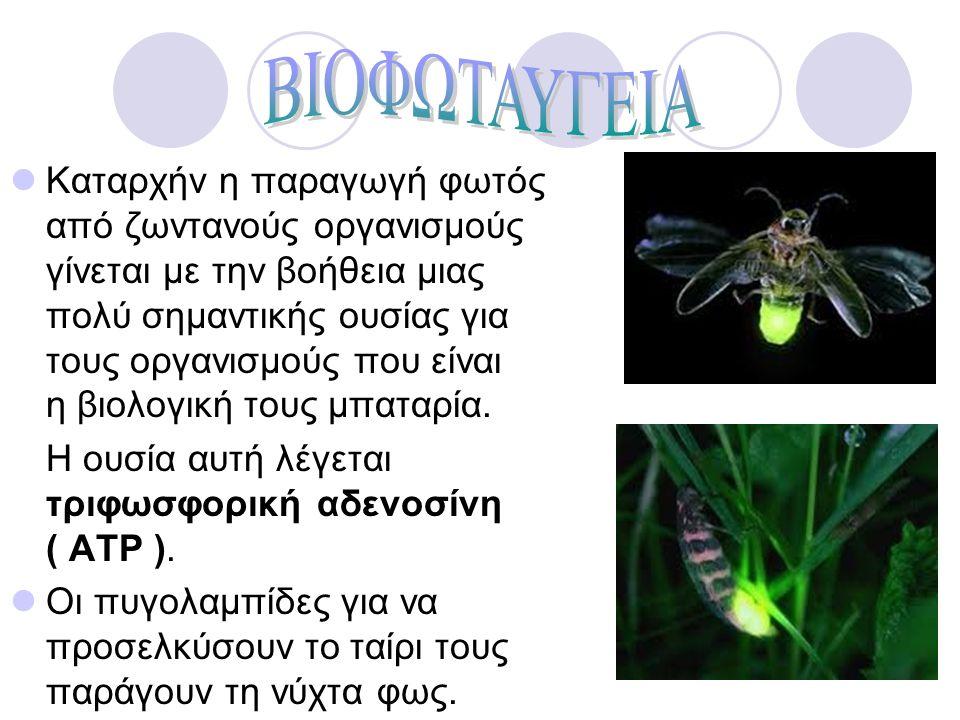 Καταρχήν η παραγωγή φωτός από ζωντανούς οργανισμούς γίνεται με την βοήθεια μιας πολύ σημαντικής ουσίας για τους οργανισμούς που είναι η βιολογική τους