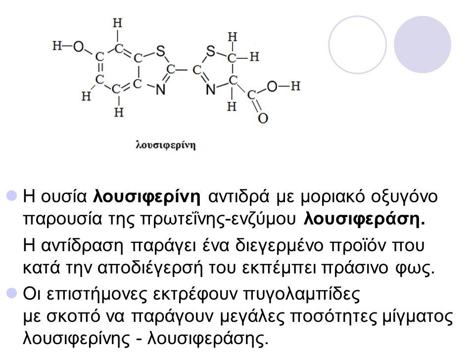 Η ουσία λουσιφερίνη αντιδρά με μοριακό οξυγόνο παρουσία της πρωτεΐνης-ενζύμου λουσιφεράση. Η αντίδραση παράγει ένα διεγερμένο προϊόν που κατά την αποδ