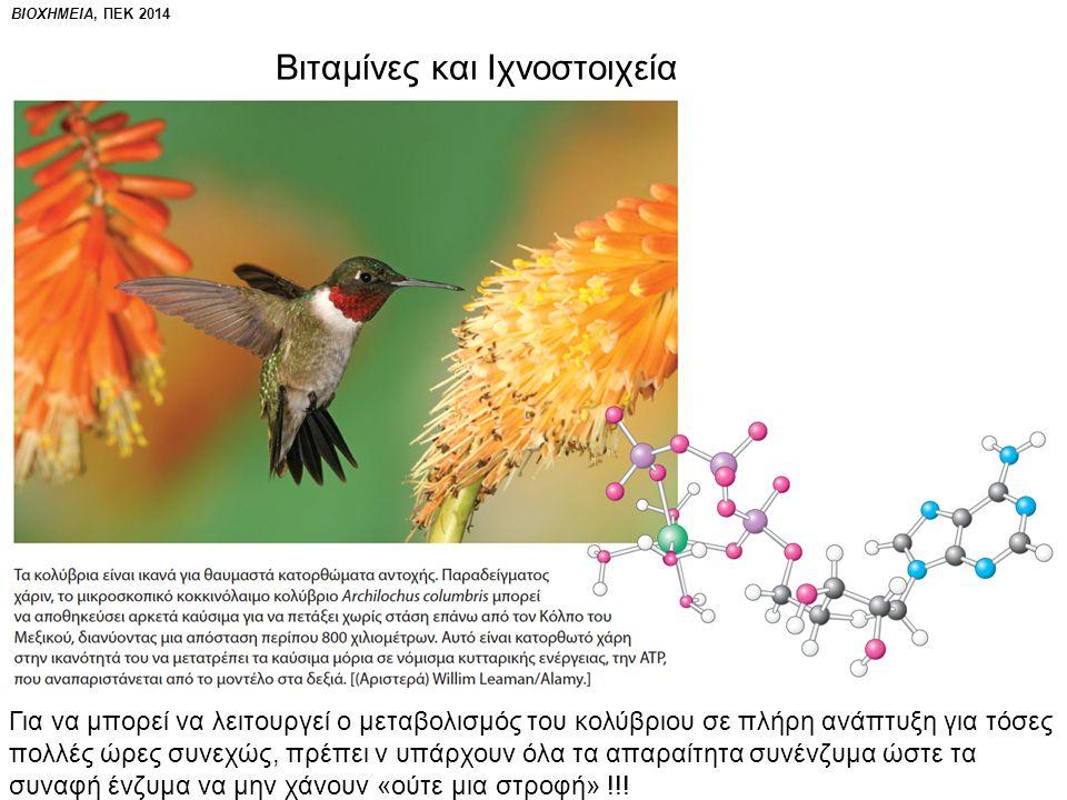 ΒΙΟΧΗΜΕΙΑ, ΠΕΚ 2014 Γλυκόλυση: η πρώτη μεταβολική πορεία στην οποία ταυτοποιήθηκαν συνένζυμα Επίσης, τα ένζυμα ταυτοποιήθηκαν με την επίδειξη αλκοολικής ζύμωσης απουσία ζωντανών κυττάρων ζύμης.