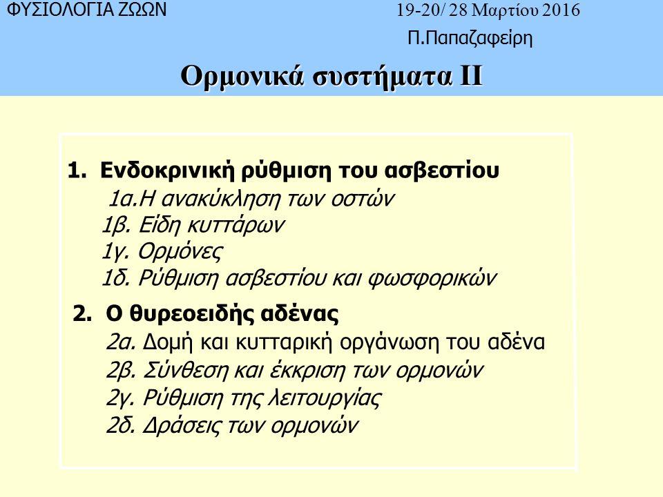 ΦΥΣΙΟΛΟΓΙΑ ΖΩΩΝ 19-20/ 28 Μαρτίου 2016 Π.Παπαζαφείρη Ορμονικά συστήματα ΙΙ 1.Ενδοκρινική ρύθμιση του ασβεστίου 1α.Η ανακύκληση των οστών 1β.