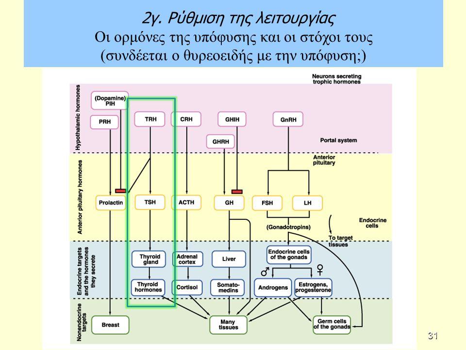 2γ. Ρύθμιση της λειτουργίας Οι ορμόνες της υπόφυσης και οι στόχοι τους (συνδέεται ο θυρεοειδής με την υπόφυση;) 31