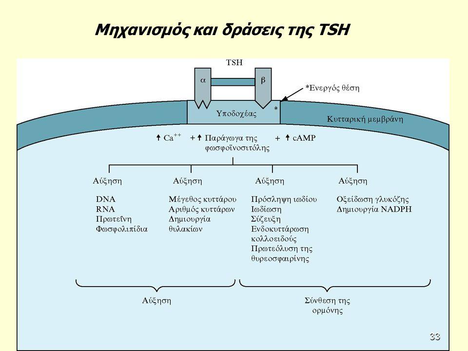 Μηχανισμός και δράσεις της TSH 33