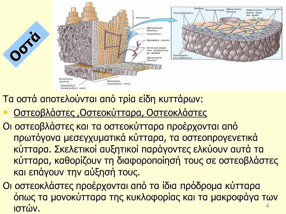 2α. Δομή και κυτταρική οργάνωση του αδένα 25
