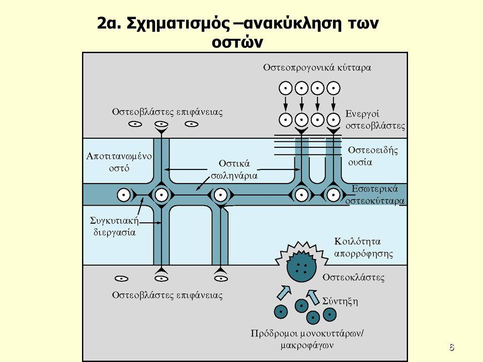 2α. Σχηματισμός –ανακύκληση των οστών 6