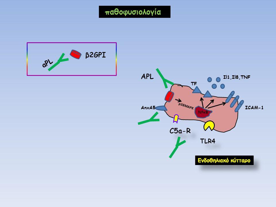 παθοφυσιολογία NFκB AnxA5 p38MAPK Il1,Il8,TNF ICAM-1 Eνδοθηλιακό κύτταρο ΑPL C5a-R TLR4 TF β2GPI aPL