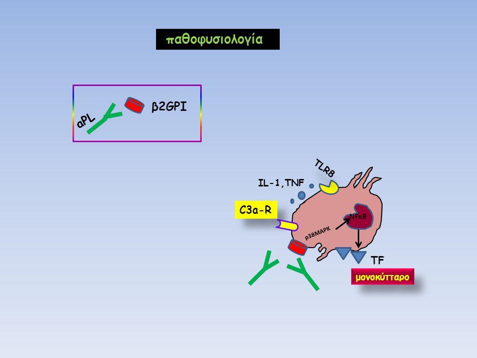C3a-R NFκΒ p38MAPK ΤFΤF μονοκύτταρο TLR8 ΙL-1,TNF β2GPI aPL παθοφυσιολογία