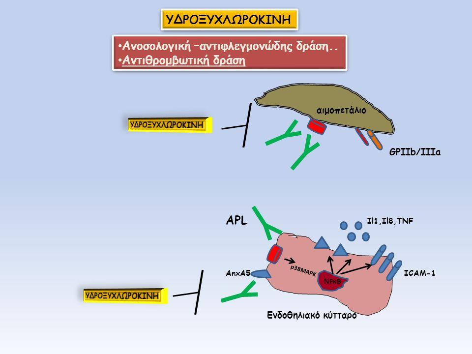 NFκB AnxA5 p38MAPK Il1,Il8,TNF ICAM-1 Eνδοθηλιακό κύτταρο ΑPL ΥΔΡΟΞΥΧΛΩΡΟΚΙΝΗ αιμοπετάλιο GPIIb/IIIa Ανοσολογική –αντιφλεγμονώδης δράση.. Αντιθρομβωτι