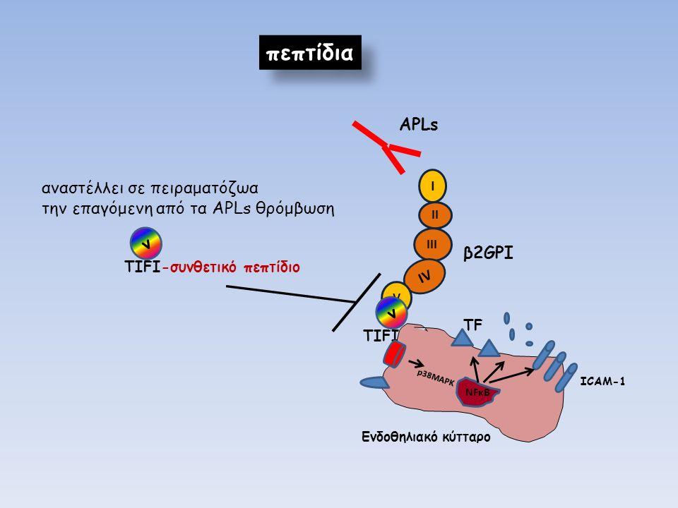 I II III IV V β2GPI APLs v TIFI πεπτίδια Eνδοθηλιακό κύτταρο NFκB p38MAPK ICAM-1 ΤFΤF αναστέλλει σε πειραματόζωα την επαγόμενη από τα ΑPLs θρόμβωση v TIFI-συνθετικό πεπτίδιο