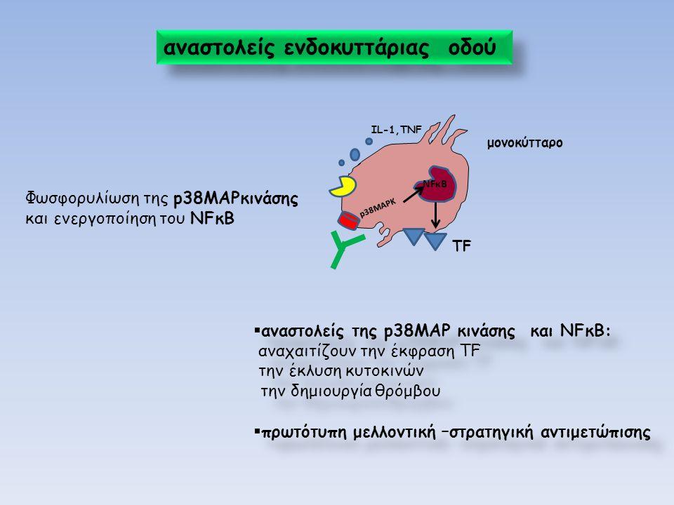 αναστολείς ενδοκυττάριας οδού NFκΒ p 3 8 M A P K ΤFΤF μονοκύτταρο ΙL-1,TNF Φωσφορυλίωση της p38MAPκινάσης και ενεργοποίηση του NFκΒ  αναστολείς της p38MAP κινάσης και NFκΒ: αναχαιτίζουν την έκφραση TF την έκλυση κυτοκινών την δημιουργία θρόμβου  πρωτότυπη μελλοντική –στρατηγική αντιμετώπισης  αναστολείς της p38MAP κινάσης και NFκΒ: αναχαιτίζουν την έκφραση TF την έκλυση κυτοκινών την δημιουργία θρόμβου  πρωτότυπη μελλοντική –στρατηγική αντιμετώπισης