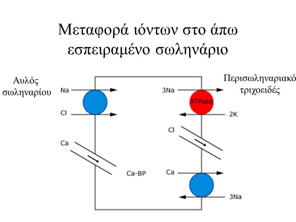 Μεταφορά ιόντων στο άπω εσπειραμένο σωληνάριο Αυλός σωληναρίου Περισωληναριακό τριχοειδές