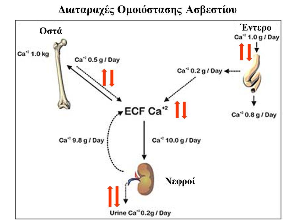 Διαταραχές Ομοιόστασης Ασβεστίου Οστά Έντερο Νεφροί