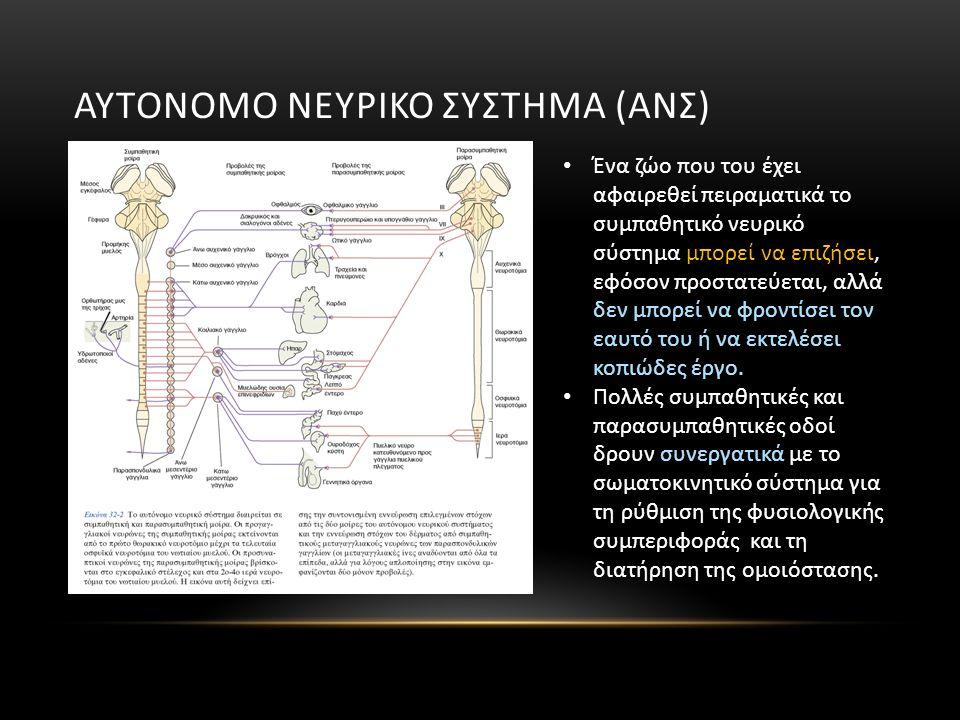 ΑΥΤΟΝΟΜΟ ΝΕΥΡΙΚΟ ΣΥΣΤΗΜΑ (ΑΝΣ) Ένα ζώο που του έχει αφαιρεθεί πειραματικά το συμπαθητικό νευρικό σύστημα μπορεί να επιζήσει, εφόσον προστατεύεται, αλλ