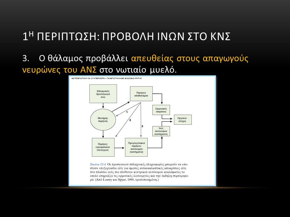 3. Ο θάλαμος προβάλλει απευθείας στους απαγωγούς νευρώνες του ΑΝΣ στο νωτιαίο μυελό.