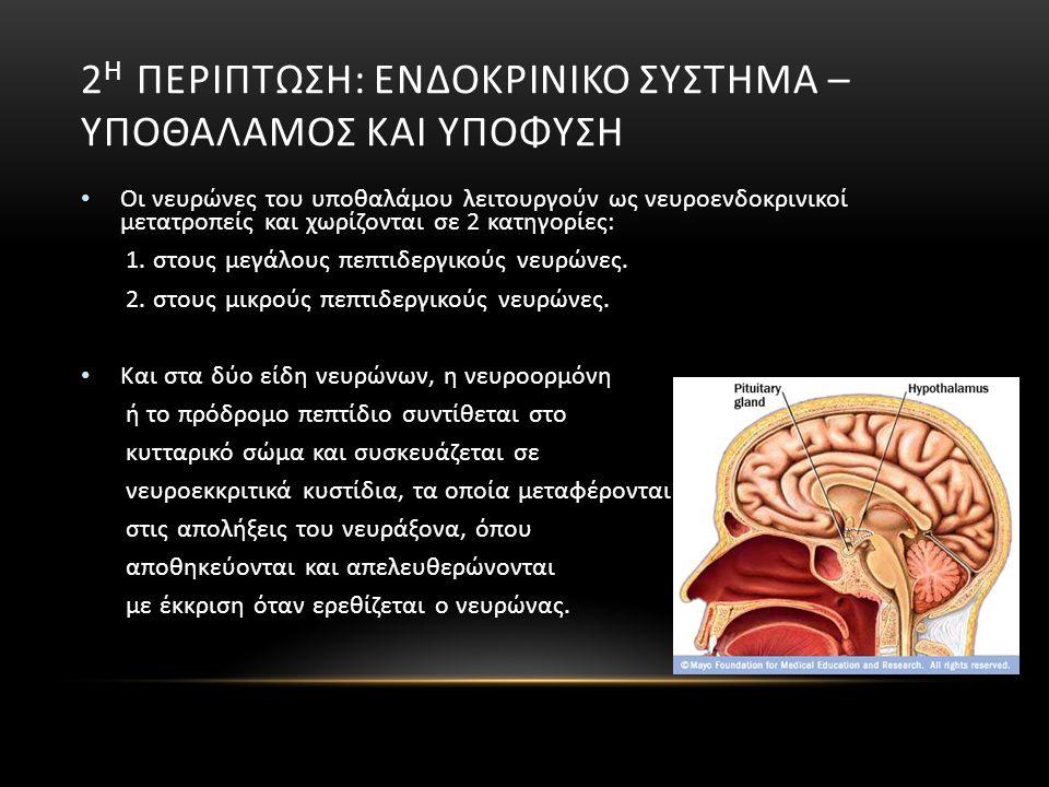 2 Η ΠΕΡΙΠΤΩΣΗ: ΕΝΔΟΚΡΙΝΙΚΟ ΣΥΣΤΗΜΑ – ΥΠΟΘΑΛΑΜΟΣ ΚΑΙ ΥΠΟΦΥΣΗ Οι νευρώνες του υποθαλάμου λειτουργούν ως νευροενδοκρινικοί μετατροπείς και χωρίζονται σε 2 κατηγορίες: 1.