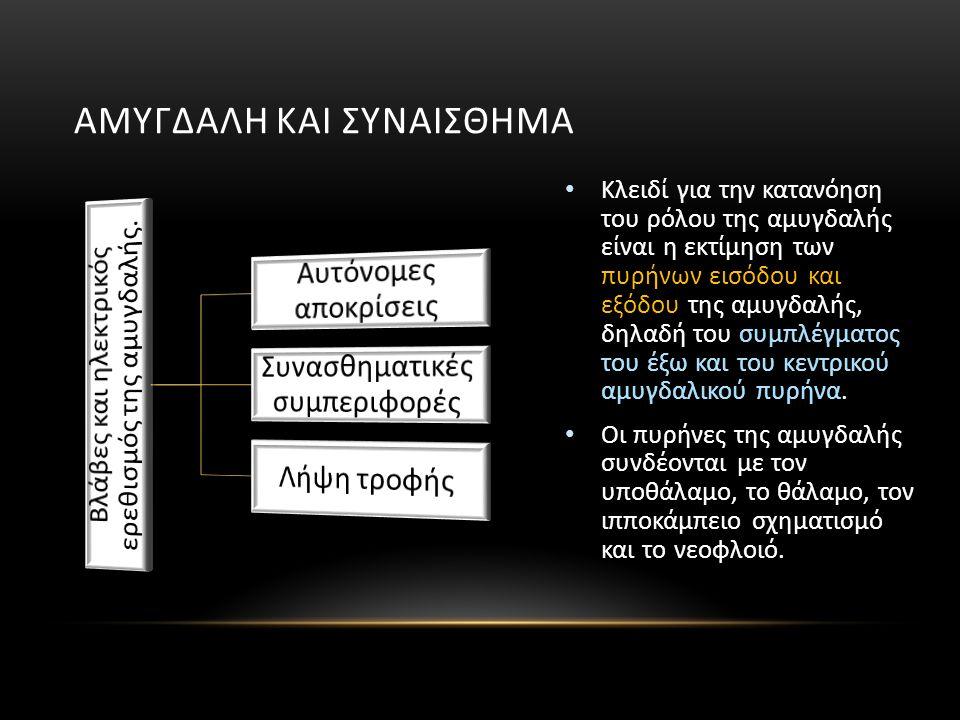 ΑΜΥΓΔΑΛΗ ΚΑΙ ΣΥΝΑΙΣΘΗΜΑ Κλειδί για την κατανόηση του ρόλου της αμυγδαλής είναι η εκτίμηση των πυρήνων εισόδου και εξόδου της αμυγδαλής, δηλαδή του συμπλέγματος του έξω και του κεντρικού αμυγδαλικού πυρήνα.