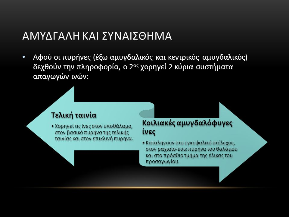 ΑΜΥΔΓΑΛΗ ΚΑΙ ΣΥΝΑΙΣΘΗΜΑ Αφού οι πυρήνες (έξω αμυγδαλικός και κεντρικός αμυγδαλικός) δεχθούν την πληροφορία, ο 2 ος χορηγεί 2 κύρια συστήματα απαγωγών ινών: Τελική ταινία Χορηγεί τις ίνες στον υποθάλαμο, στον βασικό πυρήνα της τελικής ταινίας και στον επικλινή πυρήνα.
