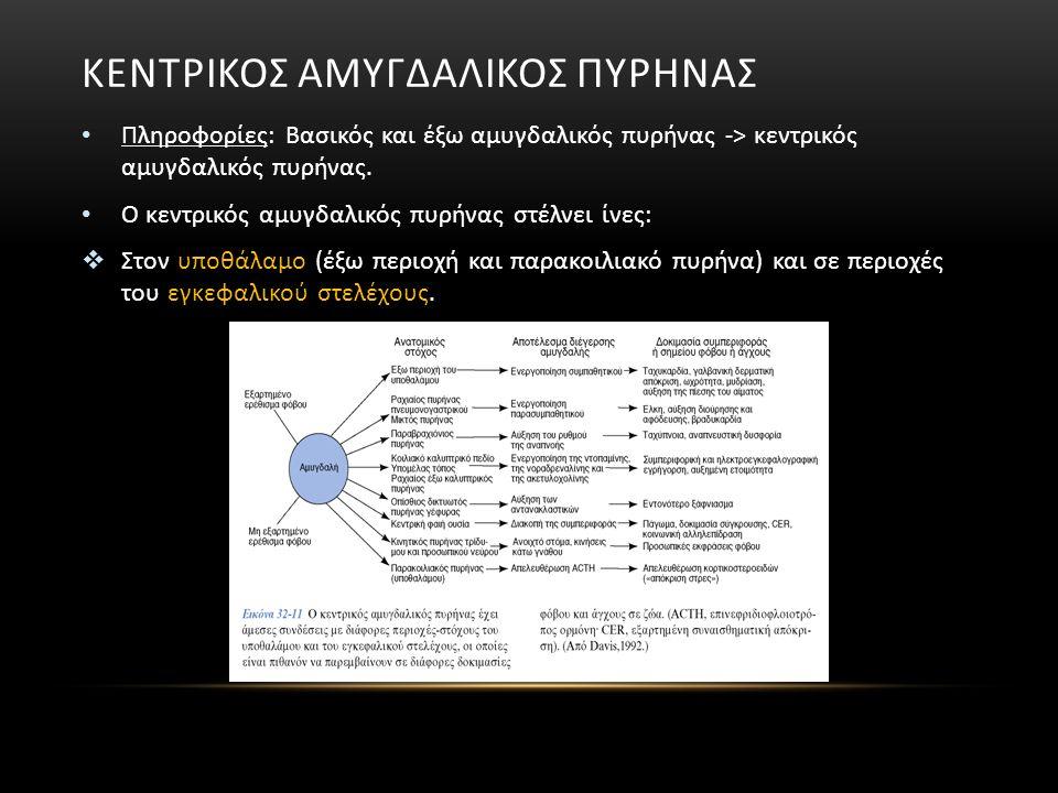 ΚΕΝΤΡΙΚΟΣ ΑΜΥΓΔΑΛΙΚΟΣ ΠΥΡΗΝΑΣ Πληροφορίες: Βασικός και έξω αμυγδαλικός πυρήνας -> κεντρικός αμυγδαλικός πυρήνας. Ο κεντρικός αμυγδαλικός πυρήνας στέλν