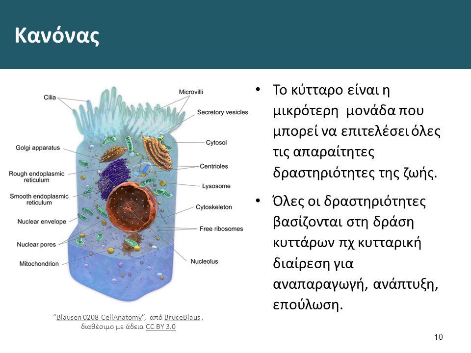 11 Διαίρεση κυττάρων Kinetochore , από File Upload Bot (Magnus Manske) διαθέσιμο ως κοινό κτήμαKinetochoreFile Upload Bot (Magnus Manske)