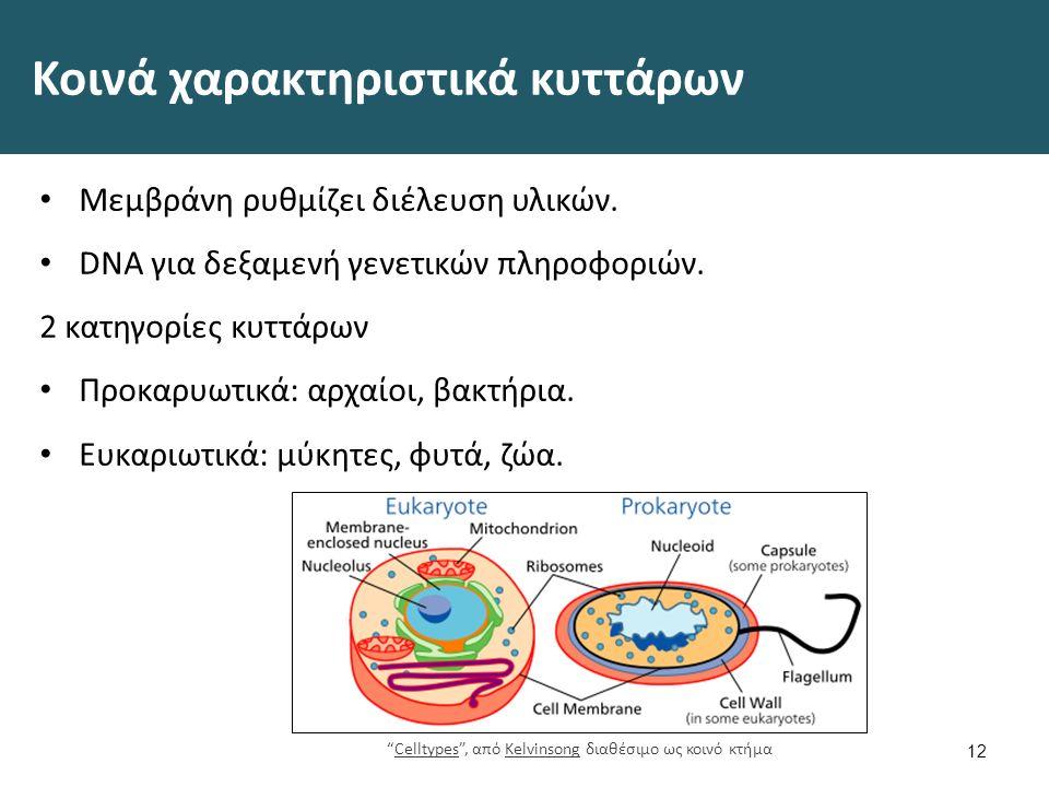 Διαφορές ειδών κυττάρων Προκαρυωτικά Δεν υπάρχει μεμβράνη διαχωρισμού DNA από υπόλοιπο κύτταρο.