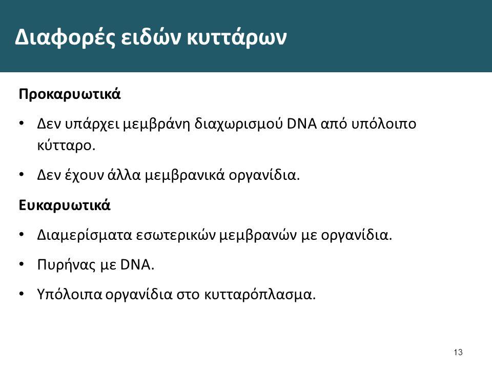 Κανόνας Η διαιώνιση της ζωής βασίζεται στις κληρονομούμενες πληροφορίες που υπάρχουν στο DNA (Deoxyriobose Nucleic Acid).
