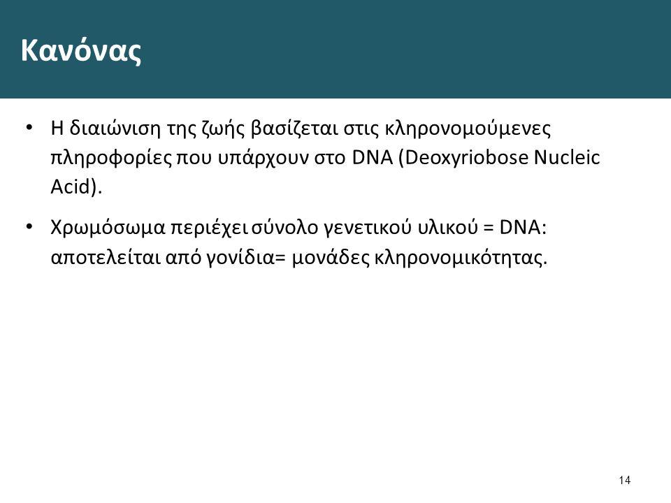 Γενετικό υλικό 15 0321 DNA Macrostructure , από BruceBlaus διαθέσιμο με άδεια CC BY 3.00321 DNA MacrostructureBruceBlaus CC BY 3.0 Blausen 0425 Formed Elements , από BruceBlaus διαθέσιμο με άδεια CC BY 3.0Blausen 0425 Formed Elements BruceBlausCC BY 3.0