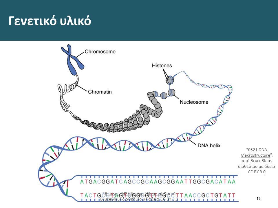 Δομή και λειτουργία DNA Στο DNA βρίσκονται διατεταγμένα χιλιάδες γονίδια-> κωδικοποιούν τις απαραίτητες πληροφορίες για να κατασκευαστούν όλα τ' άλλα μόρια του κυττάρου.