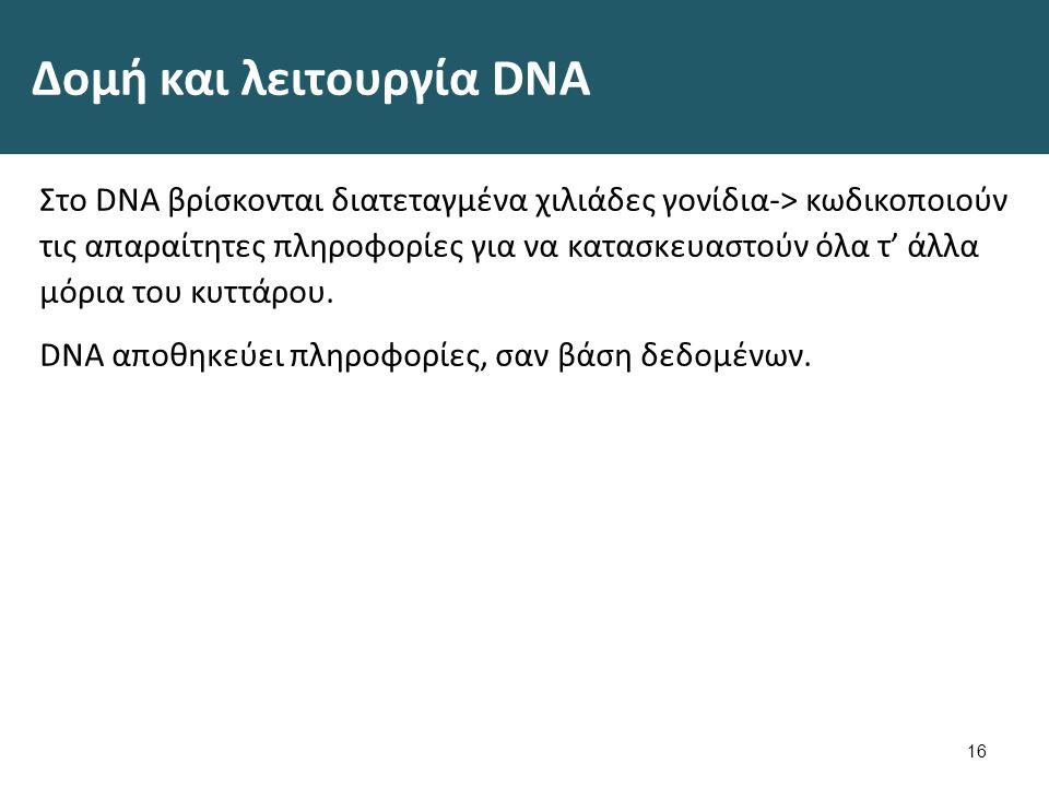 Δομή και λειτουργία DNA Κάθε κρίκος του DNA ονομάζεται νουκλεοτίδιο (4 διαφορετικά: ATCG)-> κωδικοποιούν πληροφορίες σαν την αλφάβητο.