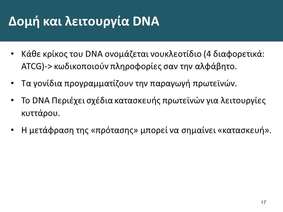 Δομή DNA 18 Diagram showing a double helix of a chromosome CRUK 065 , από Fæ διαθέσιμο με άδεια CC BY 3.0Diagram showing a double helix of a chromosome CRUK 065FæCC BY 3.0