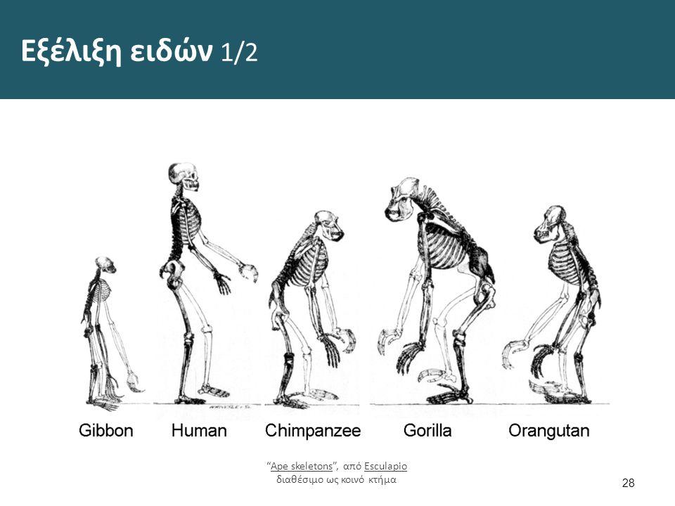 Εξέλιξη ειδών 2/2 29 Homology vertebrates-en , από CFCF, διαθέσιμο με άδεια CC BY-SA 4.0Homology vertebrates-enCFCFCC BY-SA 4.0 Darwin s finches , από Onderwijsgek διαθέσιμο ως κοινό κτήμαDarwin s finchesOnderwijsgek
